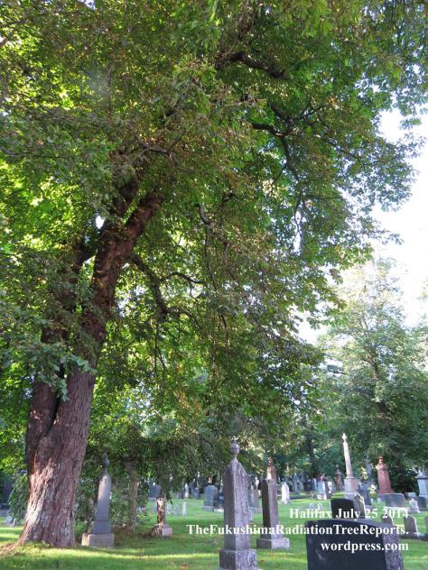 The Tree of Life Is Dying July 25 2014_1887