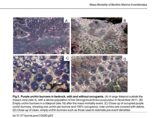 Figure 3 Jurgens LJ, et. al. (2015) Patterns of Mass Mortality among Rocky Shore Invertebrates across 100 km of Northeastern Pacific Coast